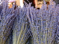 Bunches of lavender at the market in Nice