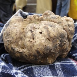 Sant'Agata Feltria: On the trail of the white truffle festival