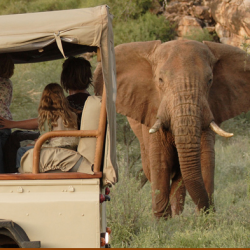 The Ultimate Christmas Gift: A Trip to Africa with Dr. Jane Goodall