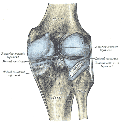 There are multiple causes for knee pain.