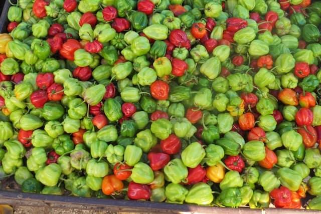 Scotch Bonnet Peppers at the Ocho Rios MarketI
