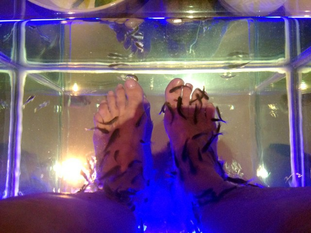 My first fish pedicure an underwater adventure in riviera for Fish pedicures illegal in 14 states