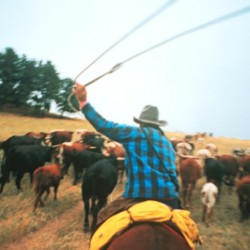 Working cattle ranch vacations: A city slicker wrangles a cowboy adventure