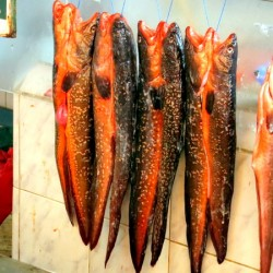 Market Visit – Coquimbo Fish Market in Chile
