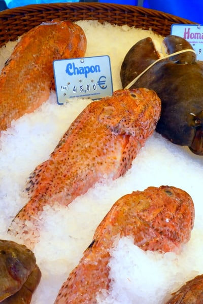 Chapon (scorpian) fish often used in boulabaisse