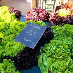 Market Visit: Carnot Market in Lyon, France
