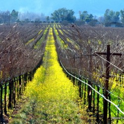 Exploring California Wine Country: There's an app for that