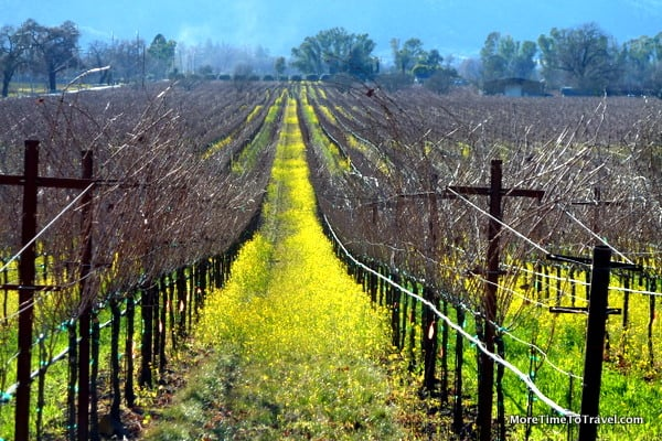 Exploring california wine country there 39 s an app for that for Best time to visit wine country