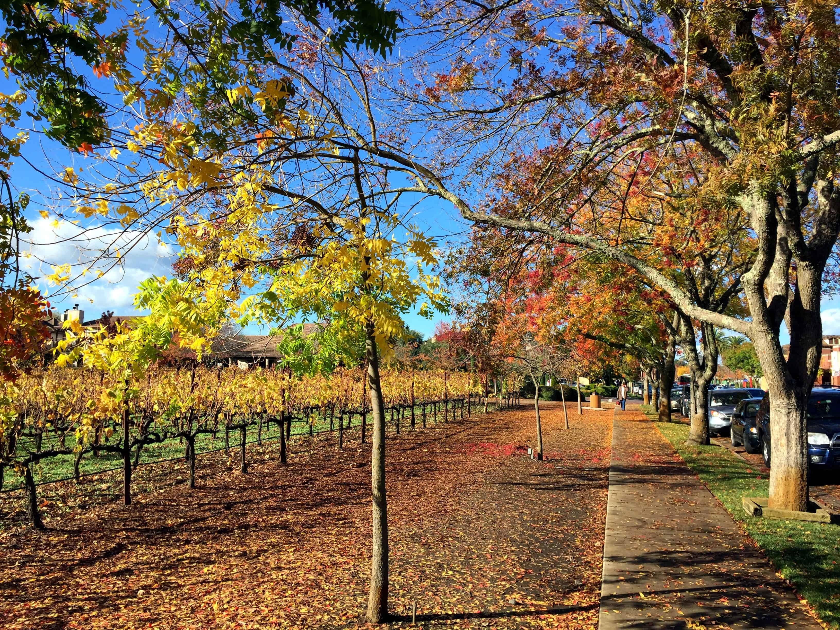 Vineyards on Washington Street