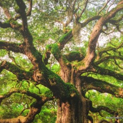 Visiting the Angel Oak Tree in Low Country