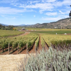 Guest Post – Napa Valley and beyond