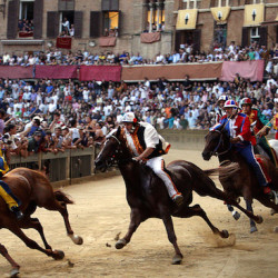 Il Palio di Siena: A unique opportunity to witness a horserace with history