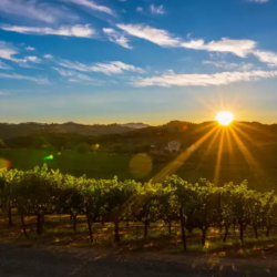 Festival Napa Valley: One more reason to visit Napa in summer