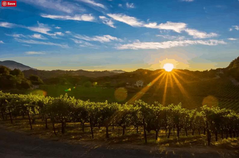 Summer Vineyards (Photo credit: Bob McClenahan for Visit Napa Valley